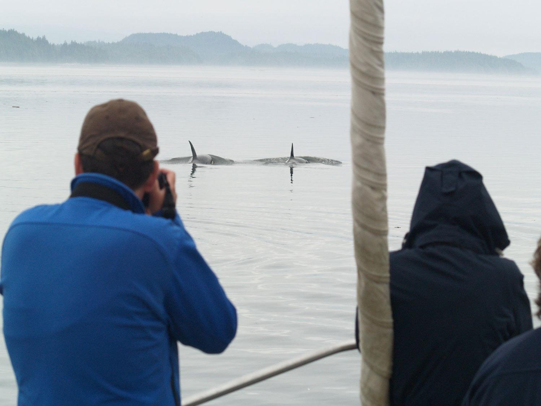 watching orca BWA LJanes